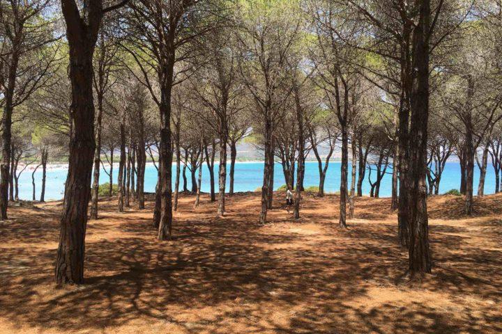 Der Pinienwald auf Sardinien. Traumhafte Kulisse am Strand von Budoni.