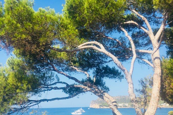 Traumhafter Ausblick - Universal Hotel Mallorca