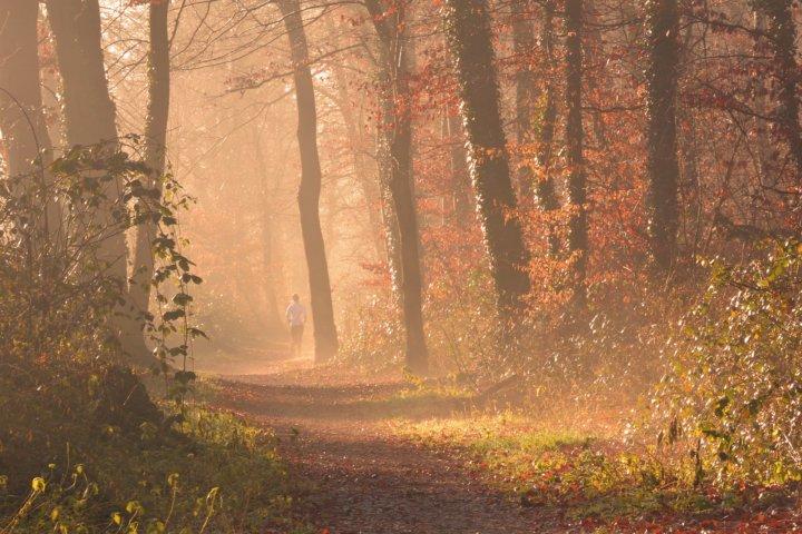 Jogging im Wald